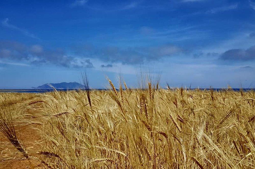 terredelfavonio-azienda-agricola-chi-siamo