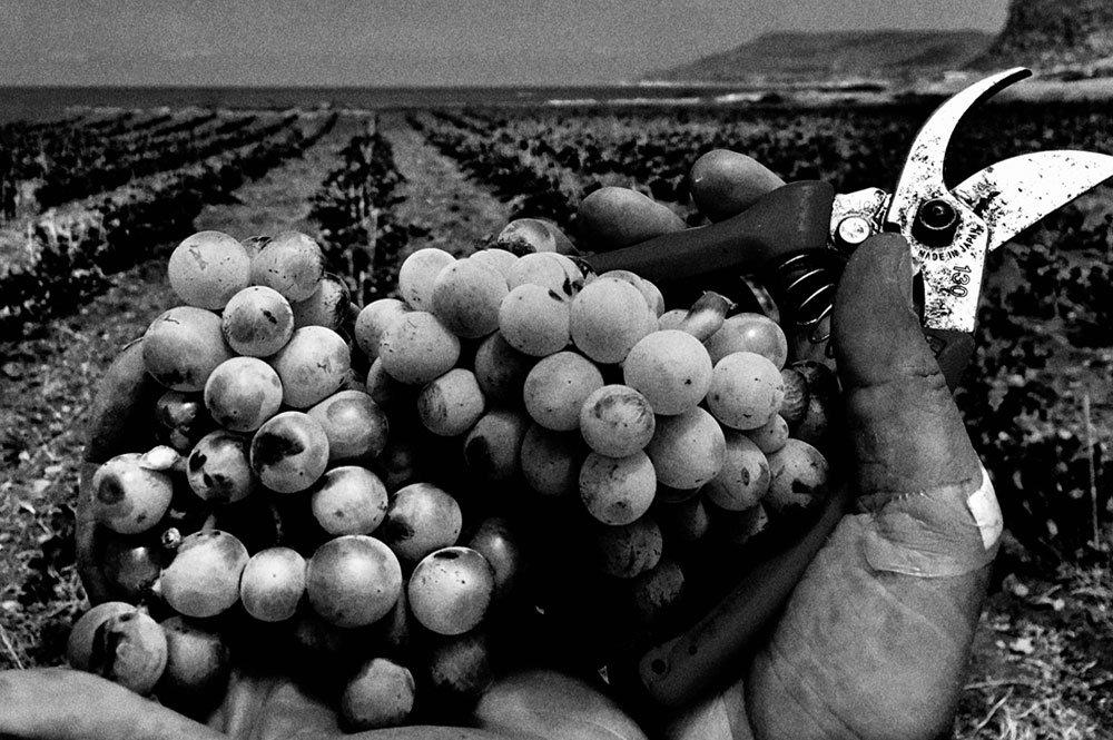 Terre del Favonio - Non c'è sapore senza sapere